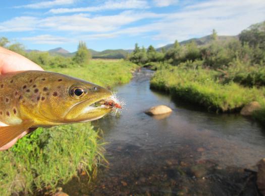JULY 31, 2012 SMALL STREAM REPORT