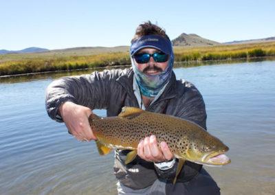 dream-stream_brown-trout.jpeg