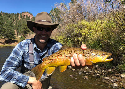 A trophy Deckers brown trout caught on a dry fly.