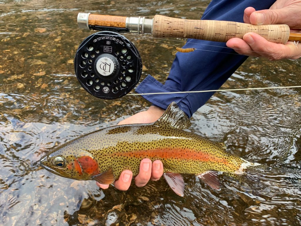 Colorado made rainbow and reel!