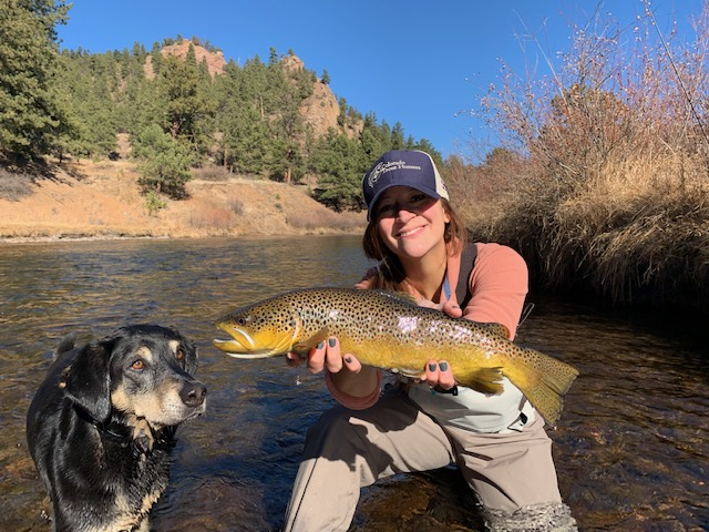 South Platte trophy brown trout.