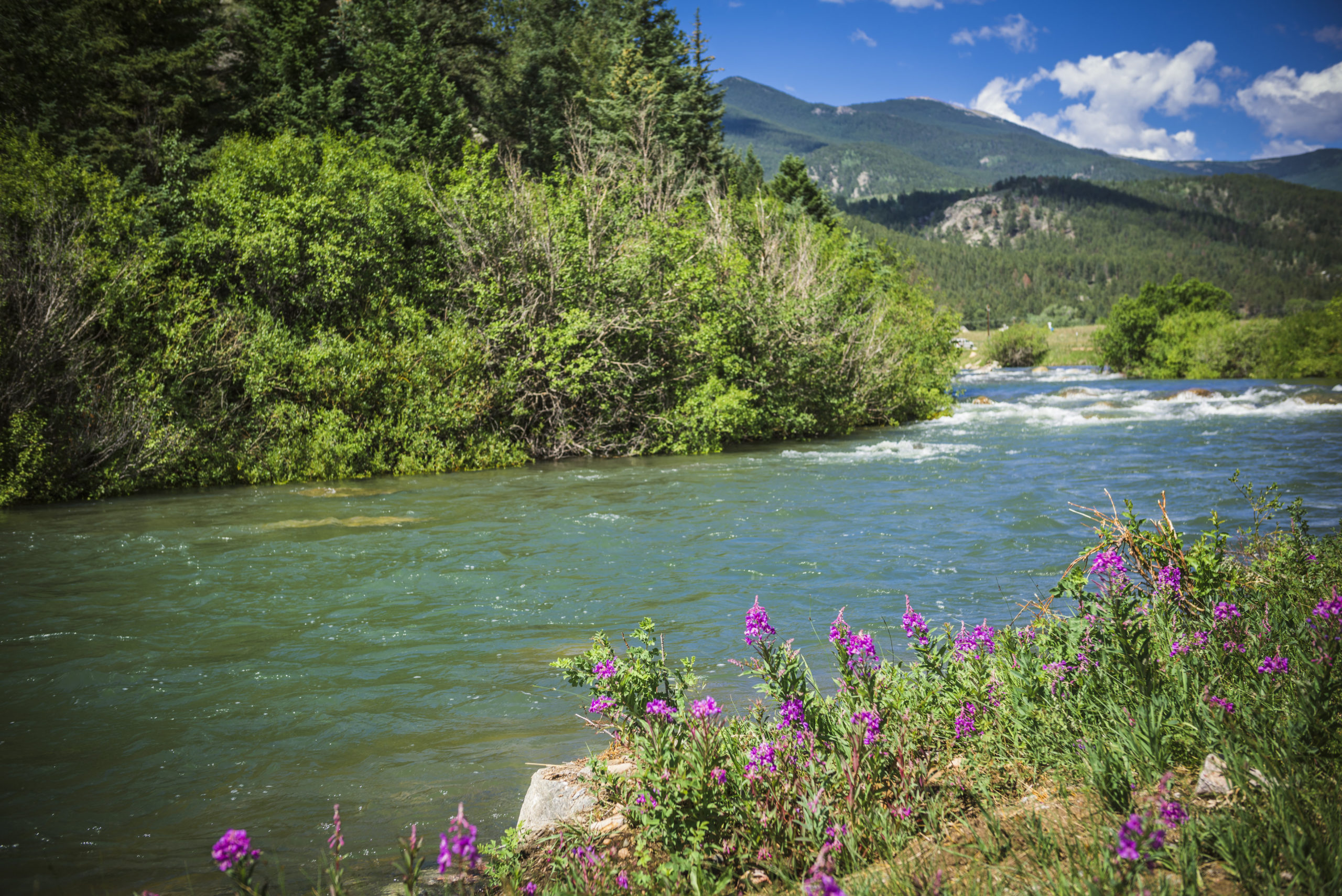 Gorgeous scenery from guided fly fishing on the North Fork of the South Platte.