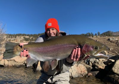 Giant trout from a private water guided fly fishing trip near Denver.