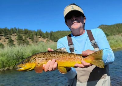 Big brown trout landed on a dry fly on the South Platte River near the town of Deckers.