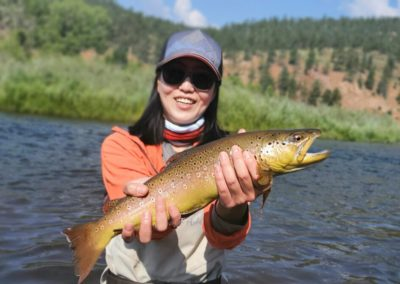 South Platte at Deckers brown trout from a guided fly fishing trip with Colorado Trout Hunters